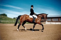 centre-equestre-activites-dressage
