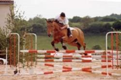 centre-equestre-activites-saut